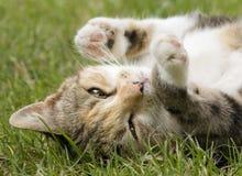 Cat. Lying cat on the grass Stock Photo