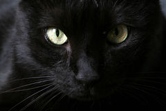 Cat. A black cat looking at you stock images