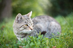 Cat. Photo of the small cat in the grass Royalty Free Stock Image