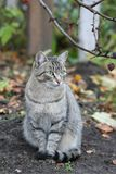 Cat. Gray cat under the tree Royalty Free Stock Image