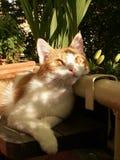Cat. Dreaming cat Royalty Free Stock Photos