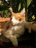 Cat. Sleeping cat Stock Images