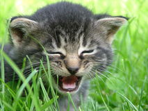 Cat. Little cat in the grass Royalty Free Stock Images