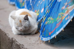 Cat. Which rests nearby the umbrella Royalty Free Stock Images