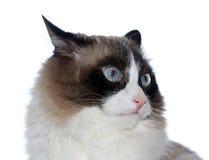 cat Στοκ Εικόνες