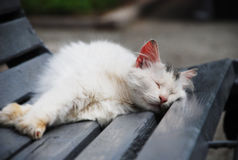 A cat. Cat sleeping on a bench Stock Image