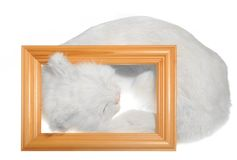 Cat. Sleeping White Cat Inside Of Picture Frame On White Background Stock Photo