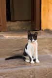 Cat. Black and white kitten with yellow eyes sitting on the porch Stock Image