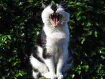 Cat1 fotografie stock libere da diritti