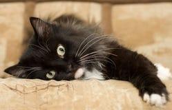 Cat. Pet royalty free stock photo