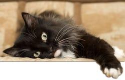 Cat. Pet stock images
