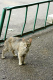 Cat. Abandoned feral domestic cat in the city yard Stock Photos