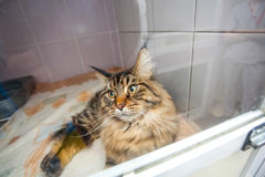 Cat abandoned in the glassify cage at animal shelter Royalty Free Stock Photos