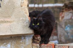 Cat in an abandoned house royalty free stock photo