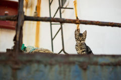 Cat on Abandoned Old Rusty Ship. Cute Cat on Worn Navy Ropes Royalty Free Stock Photos