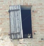 Cat. In abandoned window Stock Images