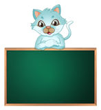 A cat above the greenboard Royalty Free Stock Image