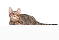 Cat above white banner Royalty Free Stock Photography