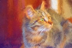 Cat abstract picture royalty free stock images