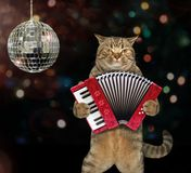 Cat with the accordion at the stage. The cat musician is playing the accordion at the stage near a mirror ball royalty free stock photo