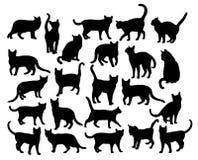 Cat Action Silhouettes Foto de archivo
