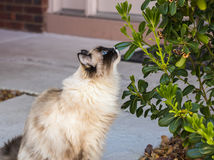 Cat admiring garden. Pretty cat curiously looking at a shrub Stock Image