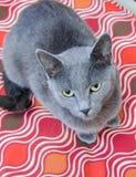 Cat Adoption Photo azul fotos de stock royalty free