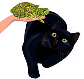 Cat afraid of turtle Stock Photos