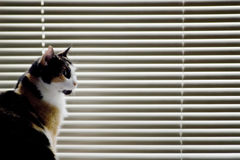 Cat against venetian blinds Stock Photos