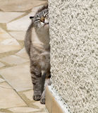 Cat against  wall Stock Photo