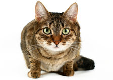 Cat against white background Stock Photos