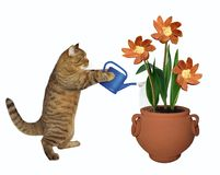Cat gardener 4 royalty free stock image