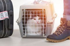 Cat in the airline cargo pet carrier Royalty Free Stock Photos