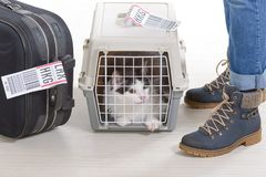 Cat in the airline cargo pet carrier Royalty Free Stock Image