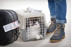 Cat in the airline cargo pet carrier Royalty Free Stock Photo