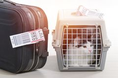 Cat in the airline cargo pet carrier. Waiting at the airport after a long journey Stock Images