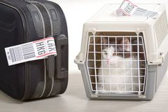 Cat in the airline cargo pet carrier Royalty Free Stock Images