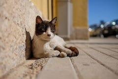 Cat in Alberobello. Cat in the sun in Alberobello Royalty Free Stock Photos