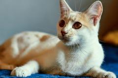 Cat on alert Royalty Free Stock Photo