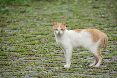 Cat in alishan mountian Stock Images