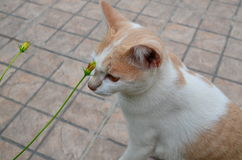 A cat. Alone with flower on street Royalty Free Stock Images