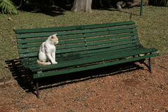 Cat alone in the Park Royalty Free Stock Photo
