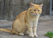 Cat. Alone cat sitting in nature royalty free stock photos