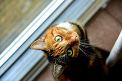 Cat. Amazing eyes of a cat like a dragon looking upwards as if they wanted to say something to ask you nice colored kitten Royalty Free Stock Photos