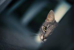 Cat Ambush fotografie stock libere da diritti