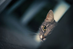 Cat Ambush. A cat is in ambush. Artistic photo look Royalty Free Stock Photos
