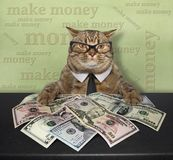 Cat with american dollars 3. The smart cat in a tie and glasses sits at the table. There are alot of american dollars on it Stock Photo