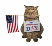 Cat with the American flag stock photo