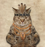 A cat is a american indian. Stock Photography