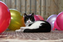 Cat amongst air ball Royalty Free Stock Images